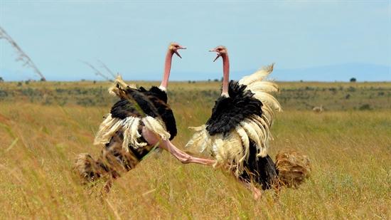 عکسهایی از دنیای حیرت انگیز حیوانات عکسهای بسیار دیدنی و از حیوانات عکس هایی شگفت انگیز از حیوانات