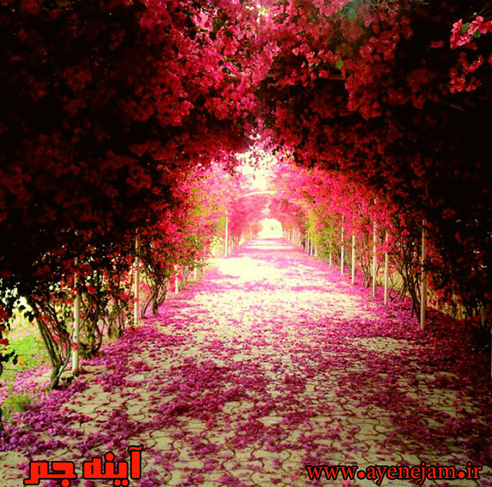 http://s6.picofile.com/file/8179372726/ddf_10_.jpg