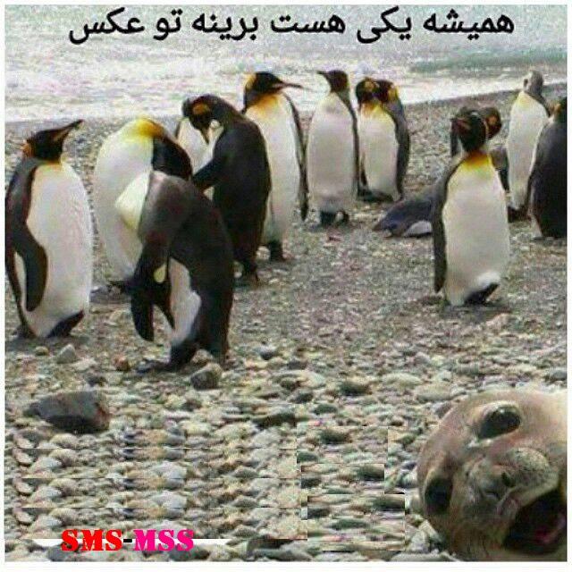 همیشه یکی هست برینه تو عکس،عکس خنده دار،عکس بامزه،عکس باحال،عکس طنز،طنز