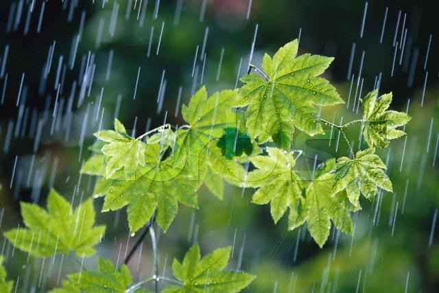 حس و حال آدم توی بارون