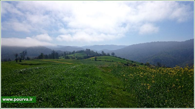 کمیل مقدسی ، مازندران ، روستای پوروا ، پوروا ، هزارجریب ، هزارجریب نکا