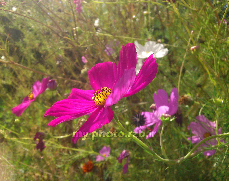 عکس3:«گل صورتی»