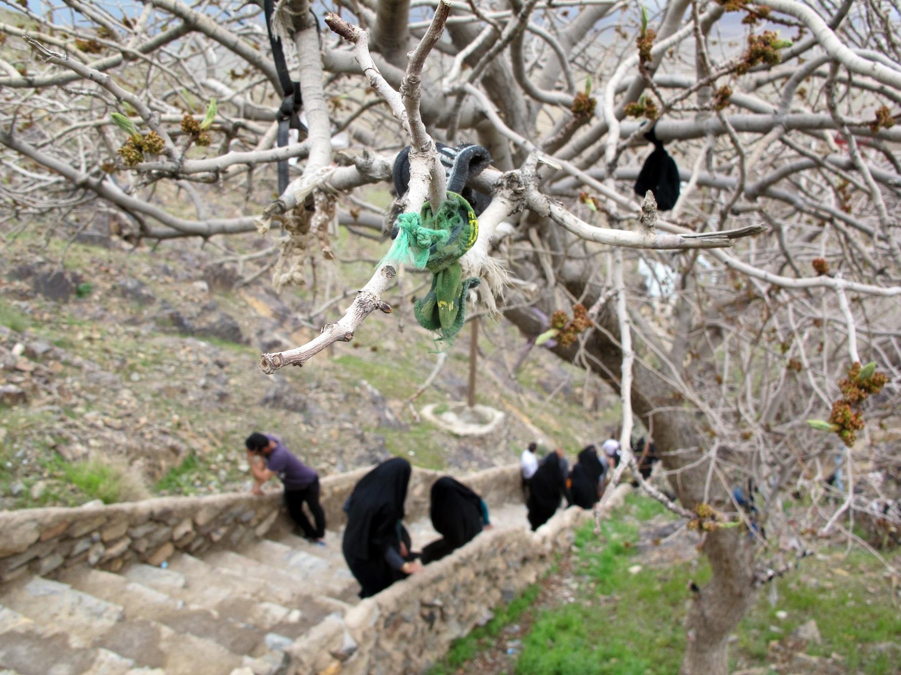 کمر زیارت ،امام زاده کمر زیارت ، تصاویر کمر زیارت ، درختان مقدس ، درختان کهنسال ، درختان بجستان