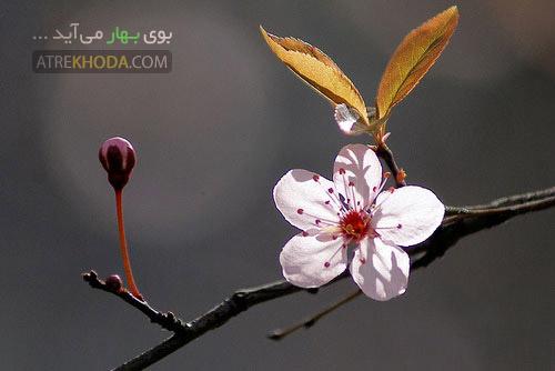 بوی بهار - عطر خدا www.atrekhoda.com