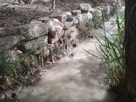 کاشت قلمه های درخت تبریزی کنار نهر آب
