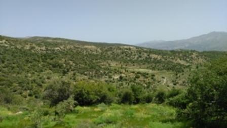 کوه بیل - تپّه بوته های جاشیر *صادقیها