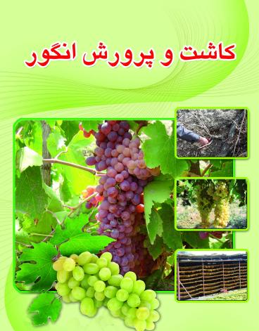 کاشت و پرورش انگور