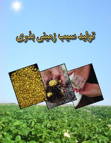 تولید سیب زمینی بذری