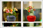 نمایشگاه گل و گیاه مشهد