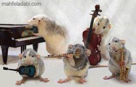 عکس کنسرت موش ها