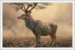 تصاویر خلاقانه از حیوانات