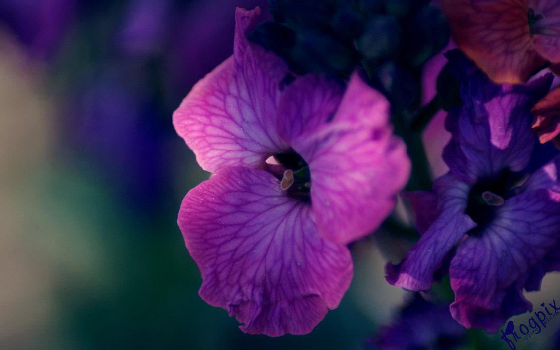 تصاویری زیبا از گل ها