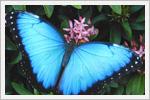 پروانه های زیبا