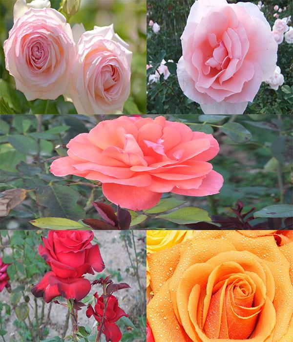 عکس های جدید و بسیار زیبا از گل ها