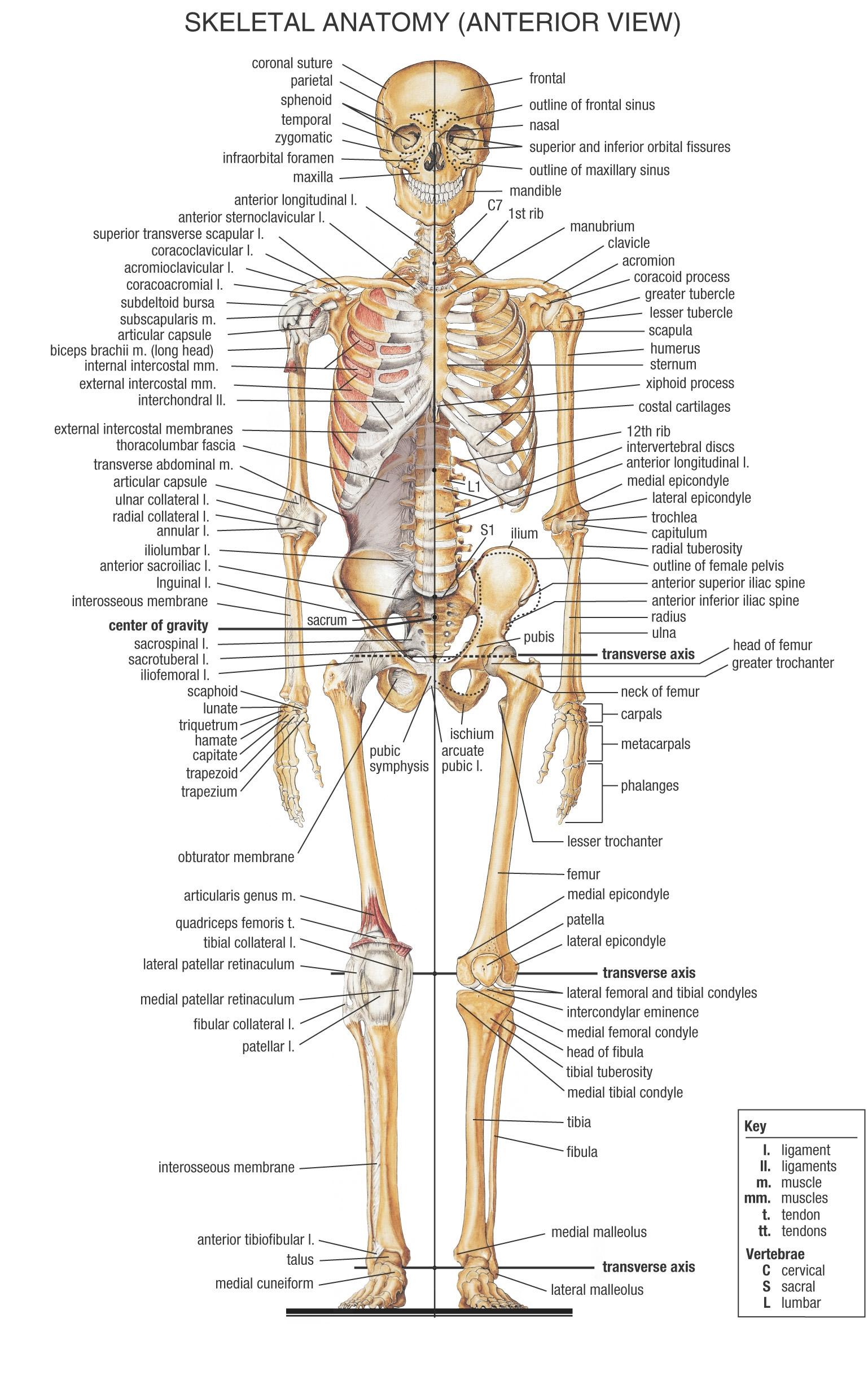 دانلود فیلم های آناتومی - جلسه 11 و استخوانهای توراکس