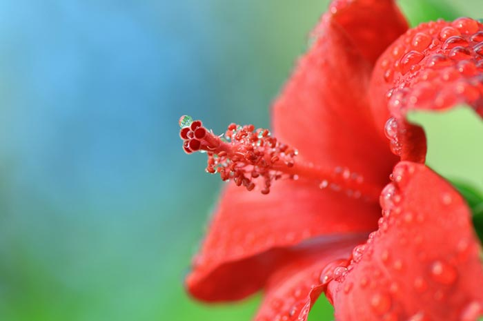 تصاویر زیبا از گل ها