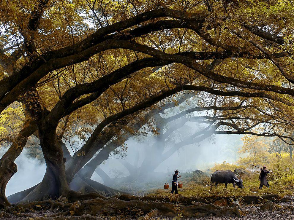 عکس زیبا از پاییزطلایی چین