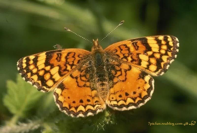 عکس هایی از حشرات زیبا