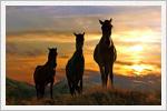 تصاویر زیبا از حیوانات