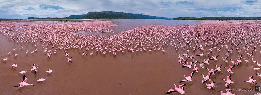 تصاویر جالب و دیدنی از چشم پرندگان