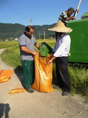 زرکوب و تانک برای درو برنج