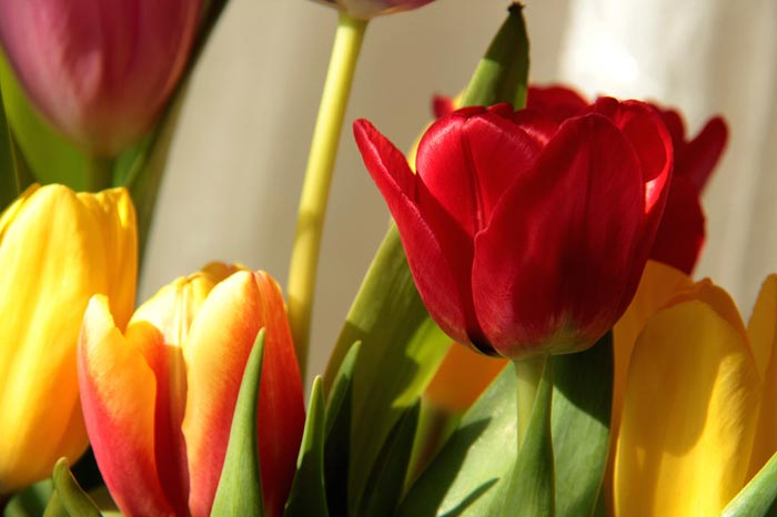 گل های زیبا,گل های بهاری,تصاویر بسیار زیبا از گل ها,گل های رنگارنگ