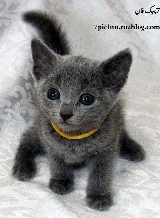 تصاویر بسیار جالب از گربه های ملوس