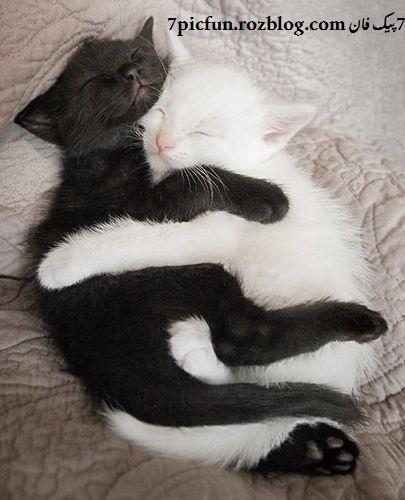 تصاویر گربه های نازنازی و ملوس