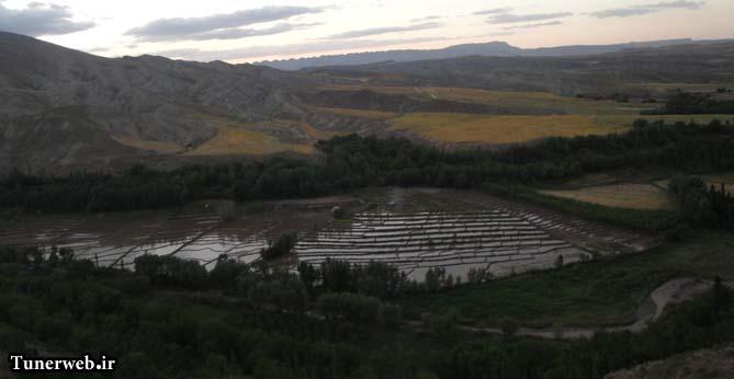 نمایی از شالیزارهای روستای قلعه نو شهرستان کلات نادر