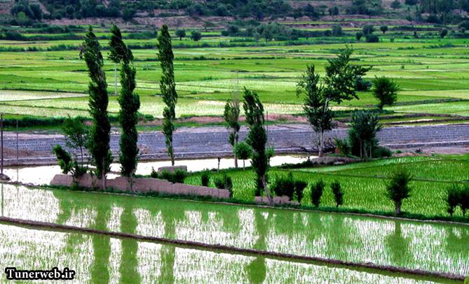 تصویری از شالیزارهای شهرستان کلات نادر