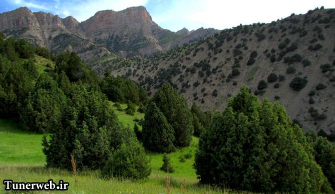 تصویری از جنگل های رشته کوه هزار مسجد شهرستان کلات نادر