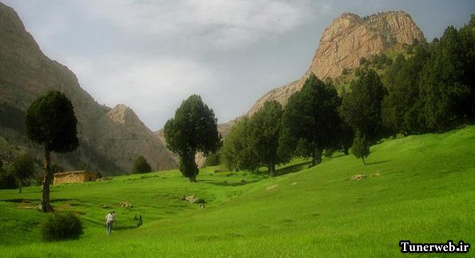 تصویری از جنگل های شهرستان کلات نادر