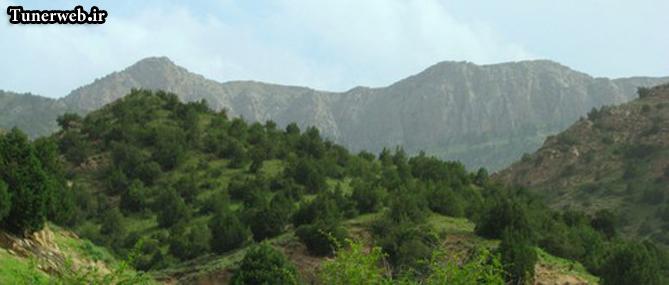 تصویری از جنگل شهرستان کلات نادر