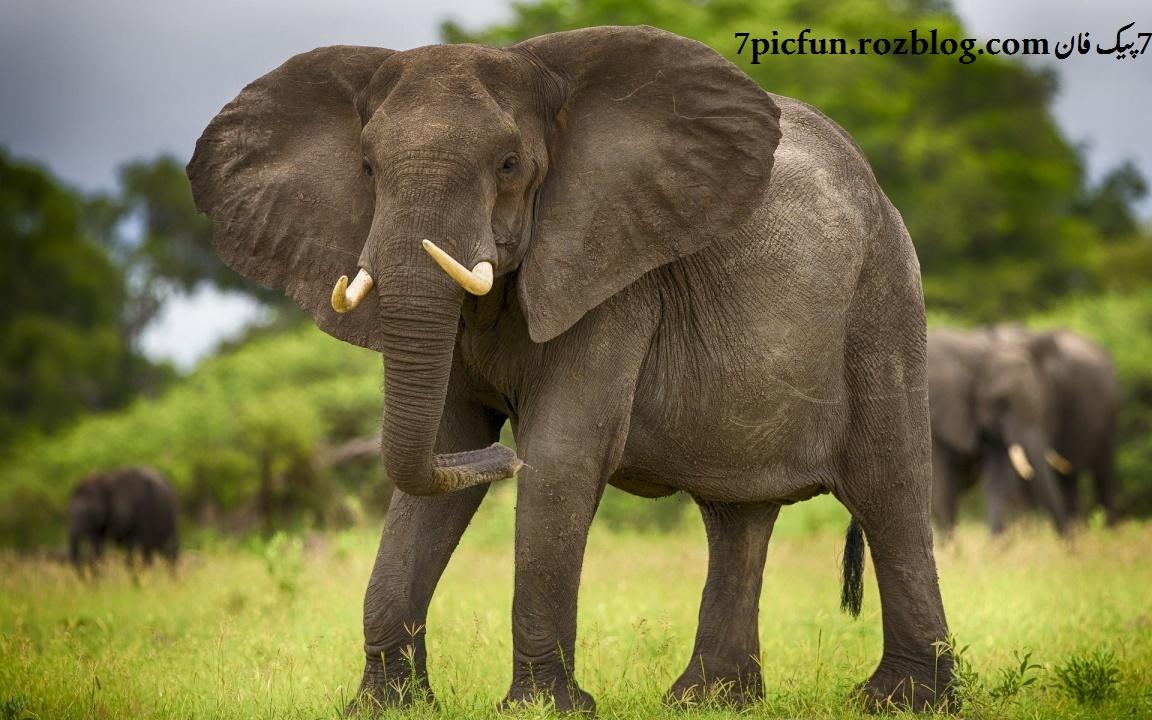 تصاویر بسیار زیبا و دیدنی از حیوانات