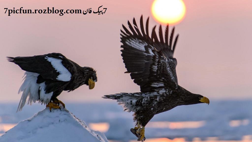 تصاویر باورنکردنی و زیبا از حیوانات