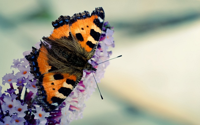 تصاویر پروانه