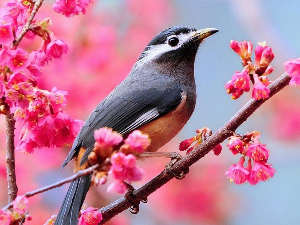 تصویر پرنده های زیبا