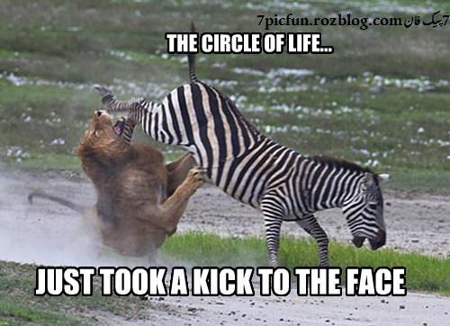 تصاویر بسیار زیبا و خنده دار از حیوانات