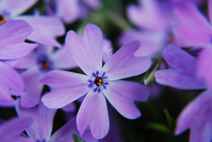 عکس گل های رنگارنگ زیبا و بسیار شاداب و با طراوت