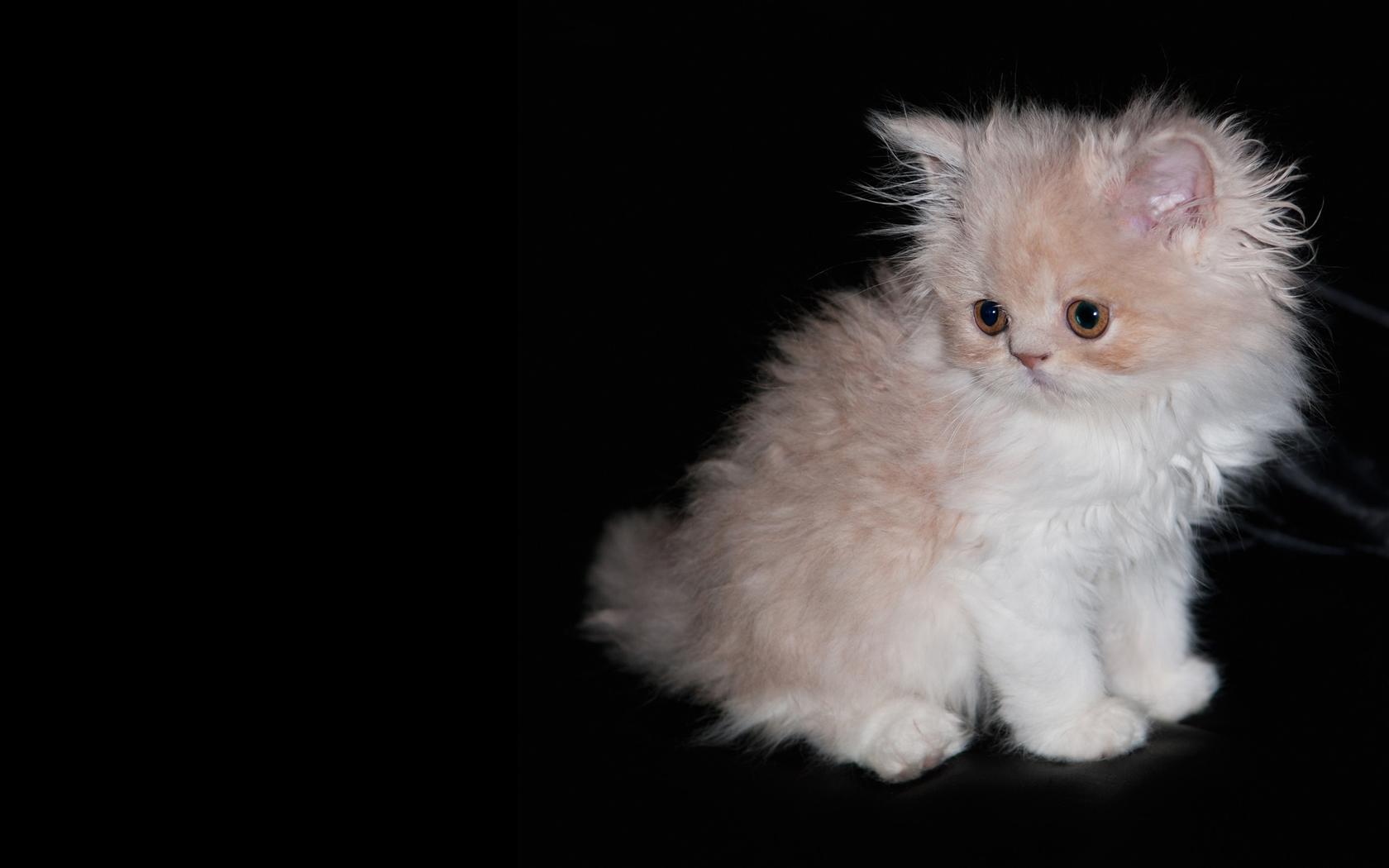 گربه های ناز و ملوس,عکس گربه,عکس گربه خوشگل و ناز,مجموعه عکس,عکس های پیشی ملوس,پیشی ملوس,تصاویر جالب از گربه ها,گربه های خوشگل و ملوس,انواع مدل های گربه های خانگی,گربه های خانگی و تربیت شده,آموزش نگهداری از گربه,بچه گربه بامزه
