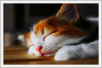 گربه های ناز و ملوس