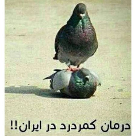 عکس نوشته خنده دار، جالب و طنز شهریور , تصاویر طنز