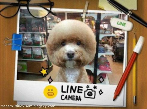 مدل جدید اصلاح موی سگ در تایوان