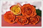 گل های زیبا برای بک گراند