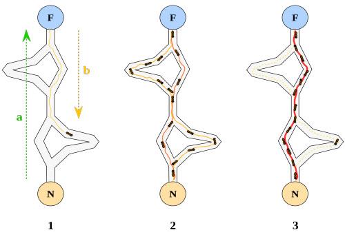 دانلود پایان نامه استفاده از الگوريتم Ant-Colony در مسائل بهينه سازي