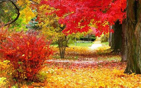 این شهر زیباترین پاییز دنیا را دارد