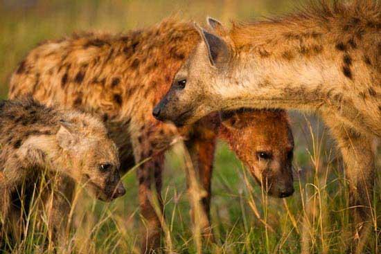 تغییر جنسیت در جانوران (عکس) , جالب وخواندنی