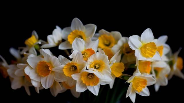 تصاویر گل