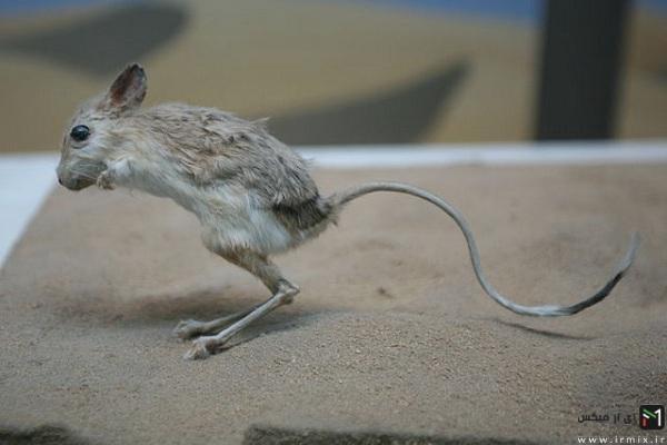 موجودات عجیب و غریب دنیا، موجودات ترسناک، موجودات در حال انقراض، موجودات کمیاب
