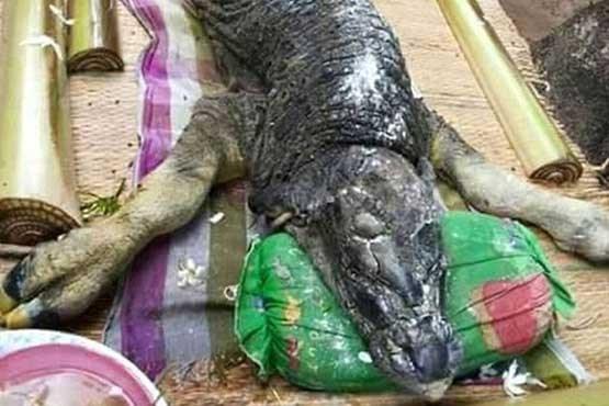 کشف جسد یک هیولای نیمه تمساح - نیمه بوفالو , جالب و خواندنی